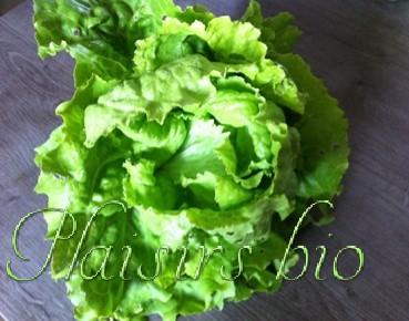Comment planter des salades en jardinière