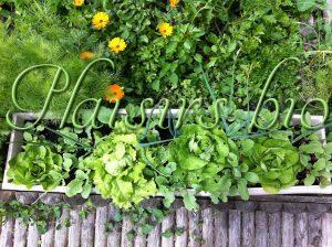 salades en jardinière